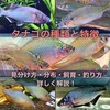タナゴの種類と特徴 見分け方・分布・飼育・釣り方のコツを紹介