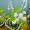 小さな盆栽から、一面のりんご畑を夢想する