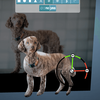 【WebVR日記1】コード0行。スマホで撮影した写真をブラウザで3Dモデル化して見る方法!