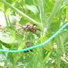 蜂の巣がサヤインゲンに
