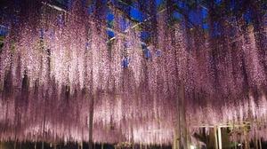 栃木の観光にも!地元民が支える自然と文化