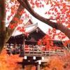 【京都紅葉巡り*4】これぞ京都の紅葉♡寺社と紅葉のコラボを堪能してきた〜円山公園・知恩院・東福寺