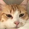 #土アップ祭 (Instagramの猫のお祭りタグ)