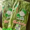 台湾野菜 A菜と大陸妹と萵苣