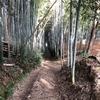 京都観光ライド