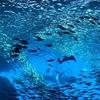 大水槽の圧倒的美しさに感動!仙台うみの杜水族館は本当に良い水族館だった