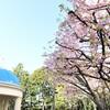 桜だけじゃないんです