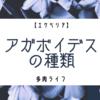 【エケベリア】アガボイデスは種類が豊富!アガボイデスの原種&交配種一覧!