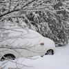 恵みの雪?