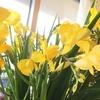 『花を飾ろう!』 コスパよし&眺めるだけじゃない、家の中の「花」。
