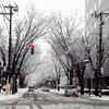 2018年の雪!写真まとめ(2) (新潟市中央区)