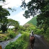 ハワイ島はビーチだけじゃない!ワイピオ渓谷で乗馬体験をしよう(いざ乗馬体験!)