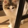 恐怖の健康診断再び!!我が家のお猫様ひま日記10