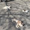 猫散歩   < 栃木県 唐澤山神社>