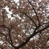 『桜前線開架宣言』書評