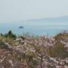 今日の1枚 ~岡山県瀬戸市 一本松展望台からの桜と海~