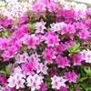 公園の初夏の花3