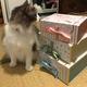 【お買い物】SABONのギフトボックスを3サイズ買って積み上げました【かわいい箱のリンク集付き】