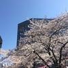 桜の開花状況 浜町緑道公園 2018/3/25