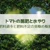 【トマト】水と肥料の与え方・肥料過多と肥料不足の見極め方