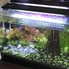 アクアリウム:水草&観葉植物を増やした効果現る??