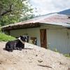 ブータンの犬たち