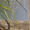 万葉歌碑を訪ねて(その301、302)―東近江市糠塚町 万葉の森船岡山(42、43)―