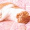 疲労回復に最適なおすすめマットレスは?「腰痛・肩こり改善など」良質な睡眠で不調の原因を解決!