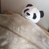 ニトリの毛布Nウォームがあまりにも気持ちが良くて思わず・・・