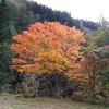 秋ですねぇ (^^♪