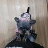 ペットショップに行く前に知ってほしい「子犬工場」の悲惨さと保護犬というオプション