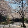 馬ファンタジスタのつぶやき 桜花賞2019は勢いがTAISETSUだぞ!