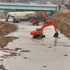 川の工事の中で頑張る野鳥