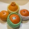 面倒な柑橘類の皮むきには「背開き」