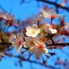 桜並木と春の花~【1】