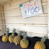 【石垣島2020-2021】パイナップルをもっと知りたい