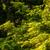 """今年(2021)初観察、夏鳥たち(その1)""""オオルリ""""""""クロツグミ""""""""センダイムシクイ""""  野鳥撮影《第263回目》"""