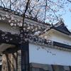 🌸桜の満開間近🌸東京北の丸公園『九段下~田安門』