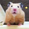 【ハムスター 動画】ハムスターに時々ご飯をあげないドッキリするとすねて部屋に引きこもる…(笑)