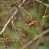 Nikonのデジイチ「D3000」で2016年10月10日までに撮影した写真です。桜や銀杏の葉が黄色くなってきました