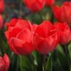 年賀状の保管どうしていますか?処分するなら春分の日までに。