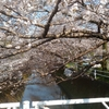 巴川排水路の桜並木と愛宕山霊園