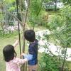 庭あそび 木登り!