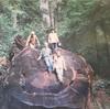 1本のヒマラヤ杉からの、22年前にタイムスリップ!!