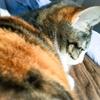 【愛猫日記】毎日アンヌさん#115