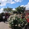 約850種3000株のバラが楽しめる「一本木公園」