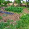 エダマメ・トウモロコシの発芽。今後の家庭菜園の展望