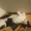今日の黒猫モモ&白黒猫ナナの動画ー1016