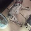 【老犬と暮らす】腰痛、膝痛