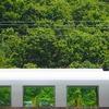 西武電車フェスタ2019⑧・・・緑が突き抜ける窓!